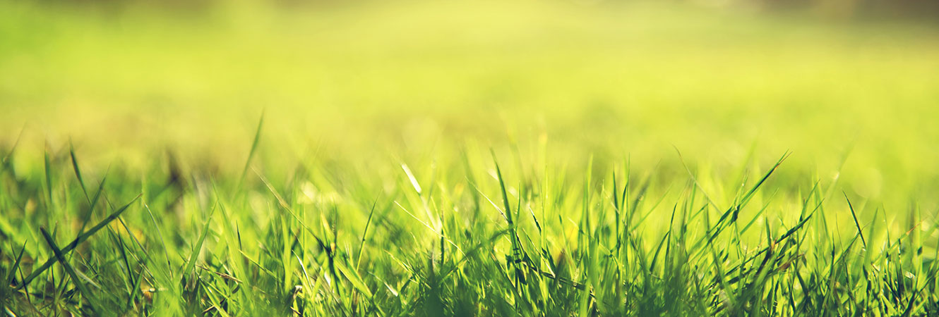 Close Up of Grass Header Image