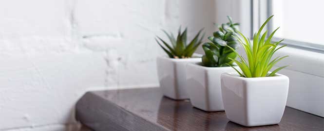 Plants in white pots in front of window header image